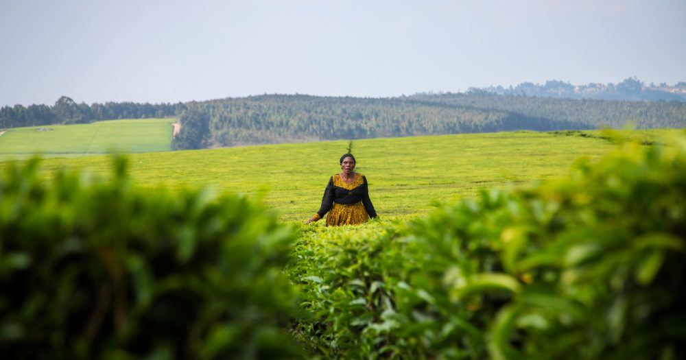 A lady stands in a vibrant green field