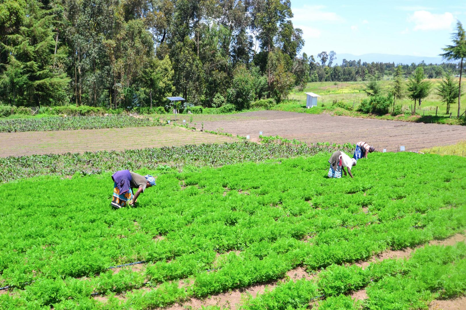 Kenyan farmers tending to their crops powered by solar panels